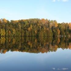 Fall Tree Colours